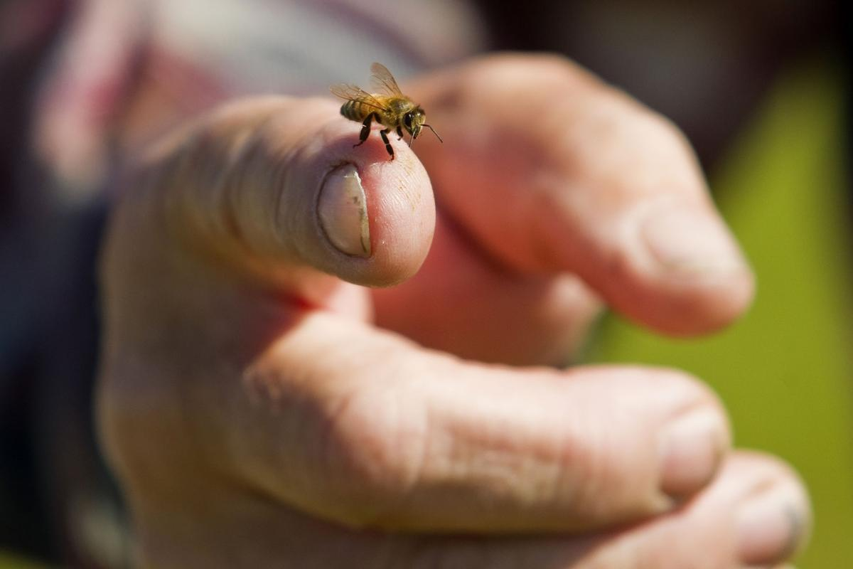 bee removal grand rapids